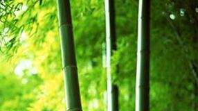 道医养生笔记丨夏至:调息静心 存养阳气