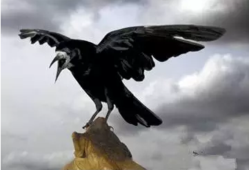 揭秘:清朝历史上的吉祥鸟为何是乌鸦不是凤凰?