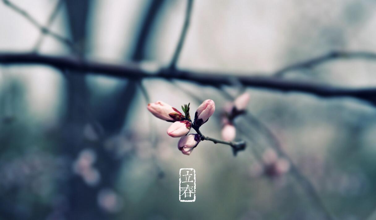 立春:阳和起蛰,品物皆春