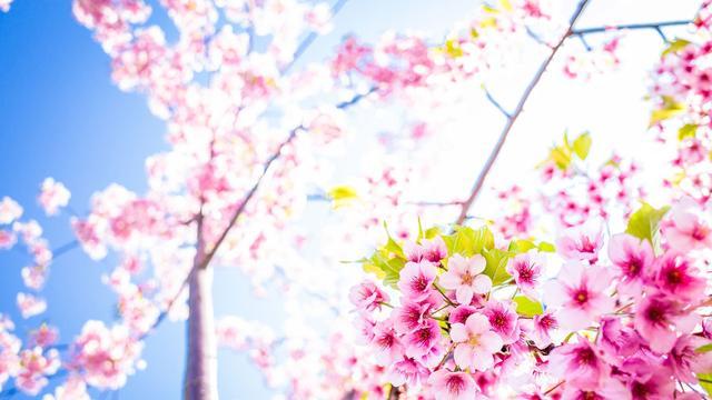 清明节:万物正生长,天地更清明