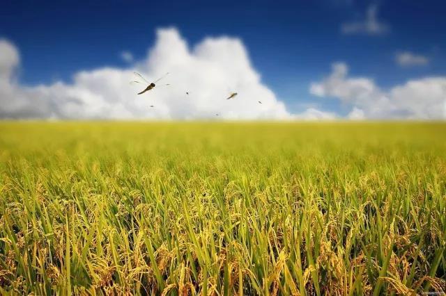 嘉定将再添一个美丽乡村 生态田园、苗木种植、地域特色…
