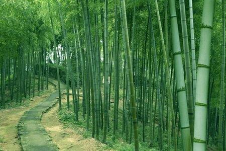 上海周边避暑自驾游推荐——登山篇