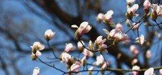 共青森林公园春色满园