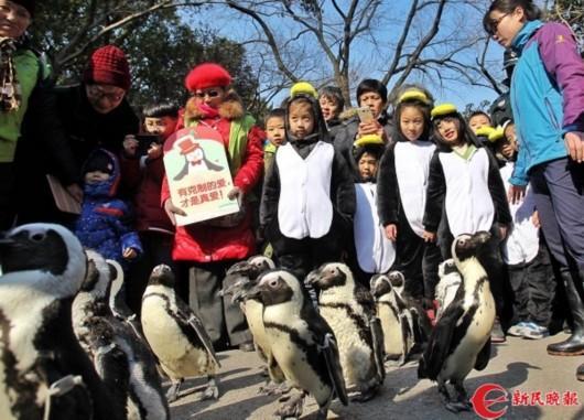 """22只企鹅漫步上海动物园 游客被""""撩""""了"""