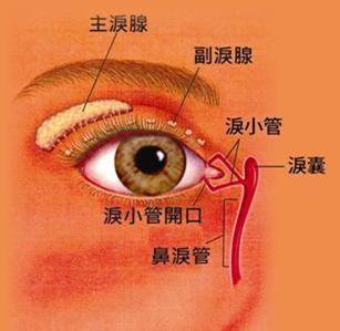 眼睛流泪不止需警惕泪道疾病