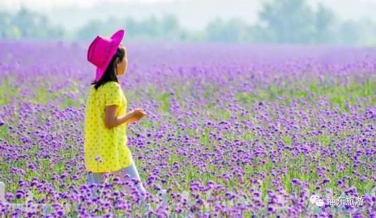 2017上海薰衣草节来了 19日起全天免费开放