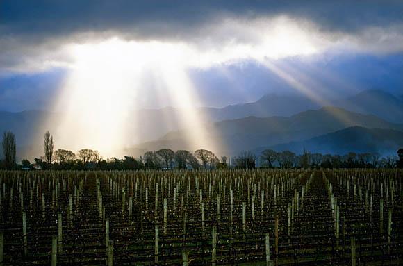 八句话解读新西兰葡萄酒