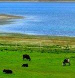 人间最美的湖:羊卓雍错湖