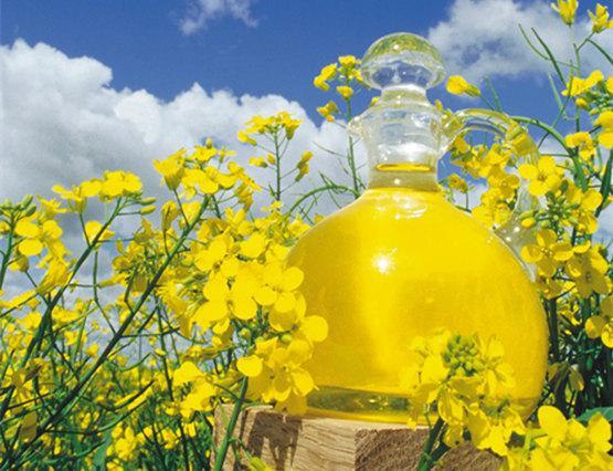 什么是芥花油?正确认识独特的健康芥花油