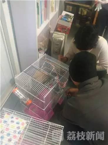 """男童用一万元学费买2只""""老鼠"""" 妈妈很头大"""