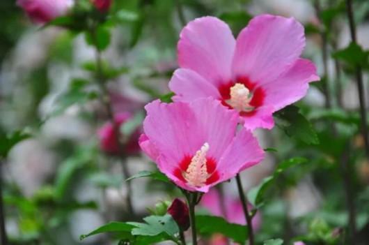 上海植物园发布最新赏花指南