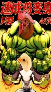 土鸡VS速成鸡 你该如何分辨