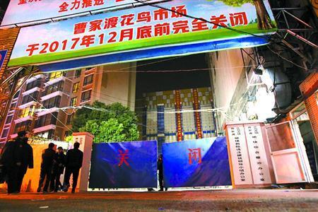 沪市中心最大花鸟市场今关闭 现场感受最后的高人气