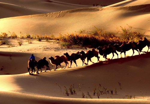 """""""沙漠旅行""""注意事项"""