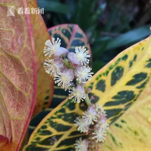 幸福像花儿一样 上海植物园发布春节赏花指南