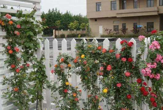 美翻了 在嘉定家门口就能看见花园