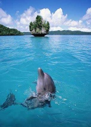 密克罗尼西亚联邦——海上的原始森林