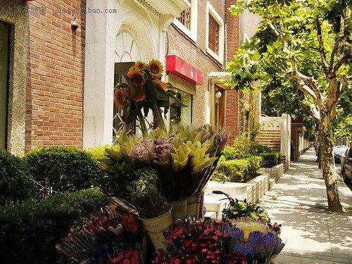 黄叶落满地 寻找上海最美的梧桐小路