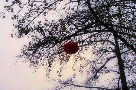 上海周边最佳赏秋地 醉美秋天找寻童话