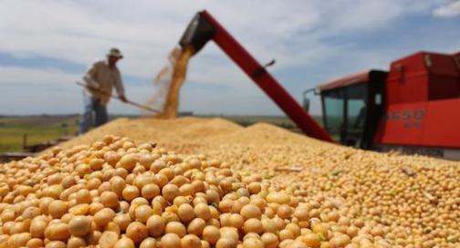 海外粮食发展潜力凸显 大康农业占得先机