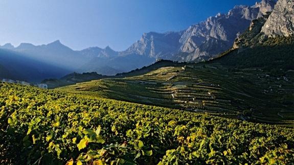 关于瑞士葡萄酒的17个事实