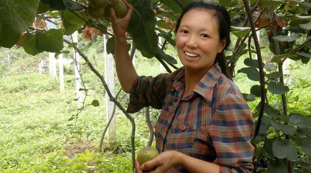 种一颗世界上最有母爱的猕猴桃