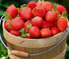 上海采草莓地儿