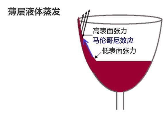 """葡萄酒为什么会""""流泪""""?"""