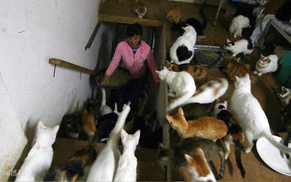 在上海,如何安置流浪猫狗一直个社会话题。多姿融,最多时她和1000多只流浪猫和50多只流浪狗共同生活。很多人们也许很难理解她,本期《图说上海》让我们一起走近她和流浪猫们的生活。 生命就像天堂里的鲜花,灵魂就像少女的眼睛。上帝也赋予流浪猫同样的生存权利。愿刚出生就被遗弃在垃圾站里的小猫小狗;被扔进粪坑和污水沟里的小猫小狗;吊在树上被活剥皮的小猫小狗;浑身跳蚤流脓流血奄奄一息的小猫小狗,即将成为人类饕餮盛宴的猫狗,能像《雾都孤儿》中的小男孩一样早日回家多姿融。 写下这番话的人是多姿融,自从1996年救助并收