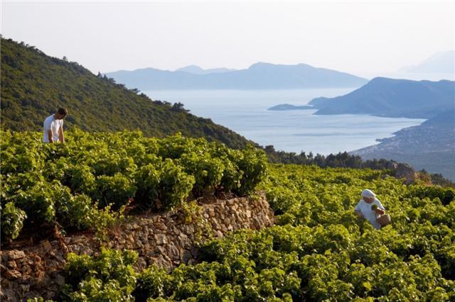迈夏尔(METAXA):来自希腊的独特琥珀烈酒