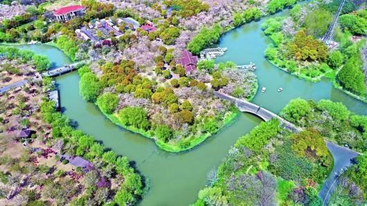 上海樱花节来了 奉上N条宝山赏樱之旅线路