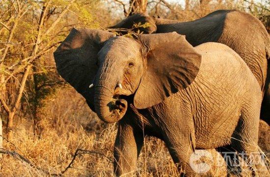 最震撼的奔跑 非洲草原动物大迁徙