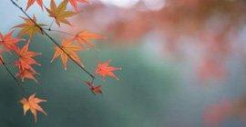 霜降|在秋�a中,�w味人�g的情味