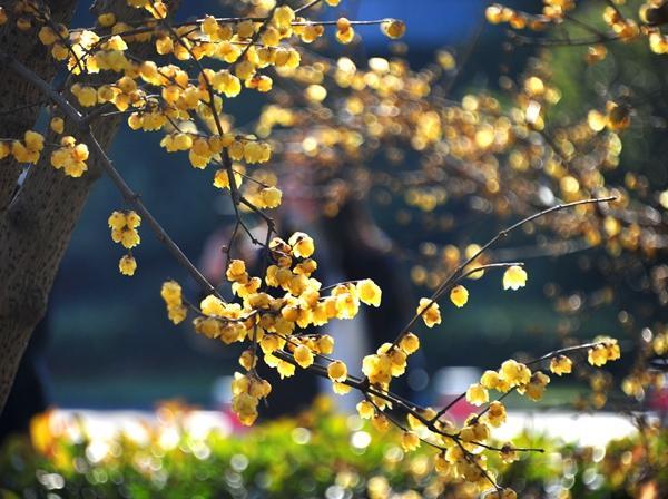 申城今起回暖 最高7℃ 下周雨水光顾