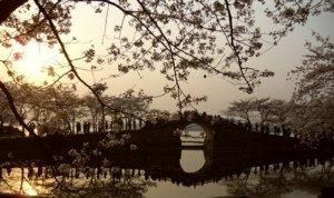 无锡鼋头渚赏樱