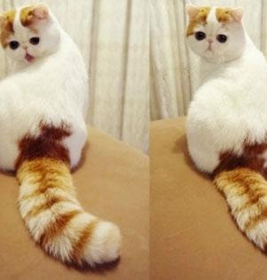 超萌猫咪咖啡馆