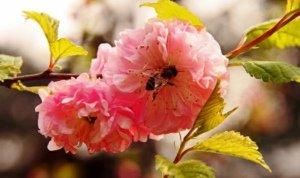 踏青何须远,春自心中得