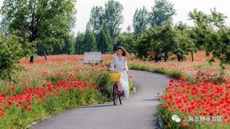 上海的几座鲜花环绕的水城  你去过吗