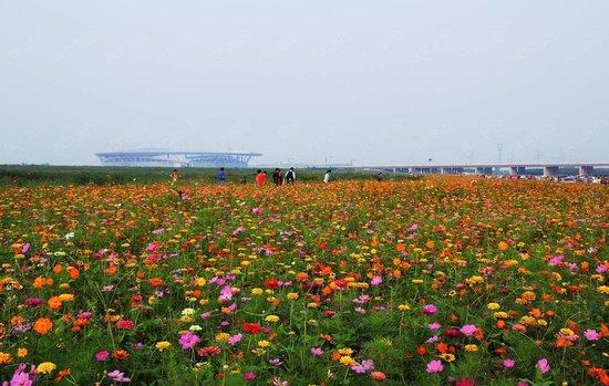 石家庄滹沱河生态区重新开放?那些年你错过的美景在这里