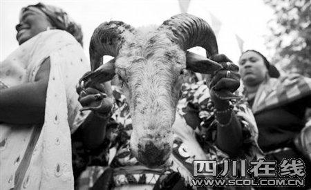 世界杯开球前杀牛祭祀! 传播文化or虐杀动物