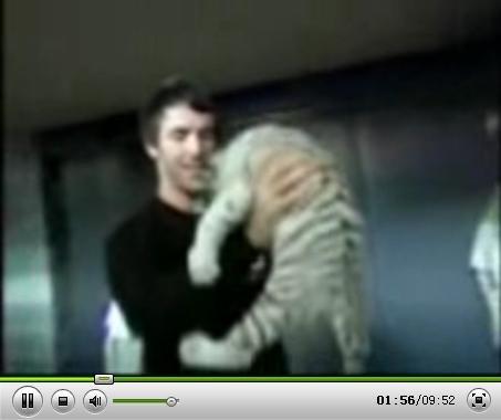 视频:纳什与白色老虎嬉戏 双胞胎女儿凑热闹