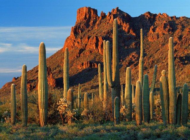 我的NBA游记(20):沙漠中的凤凰城