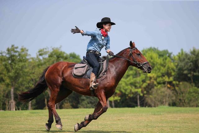 奇葩!马术俱乐部起纠纷 双十一法院拍11匹马