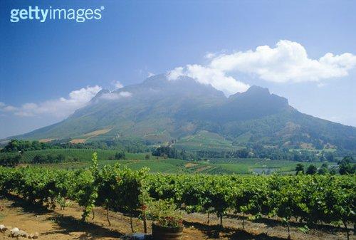 南非旅游圣地 西开普省