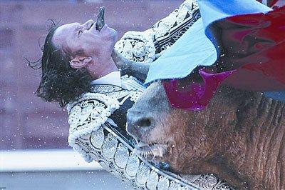 西班牙一斗牛士不慎失足 咽喉遭牛角顶穿(图)
