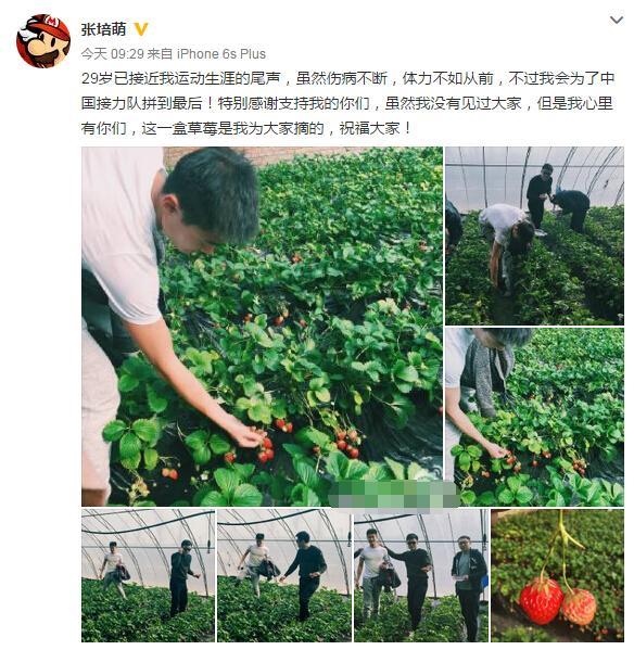 张培萌摘草莓庆祝生日 自曝已近运动生涯尾声