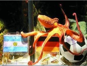 谁是世界杯最强预言帝? 小章鱼挑战贝利乌鸦嘴