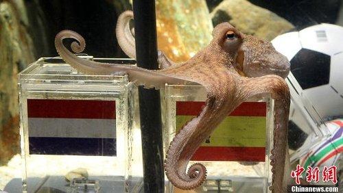 章鱼保罗成世界杯头号明星 贝利神兽亦相形见绌