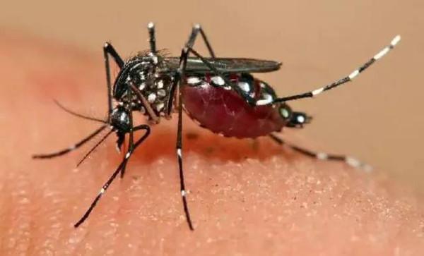 巴西卫生部长:勿惧寨卡病毒 里约奥运欢迎你