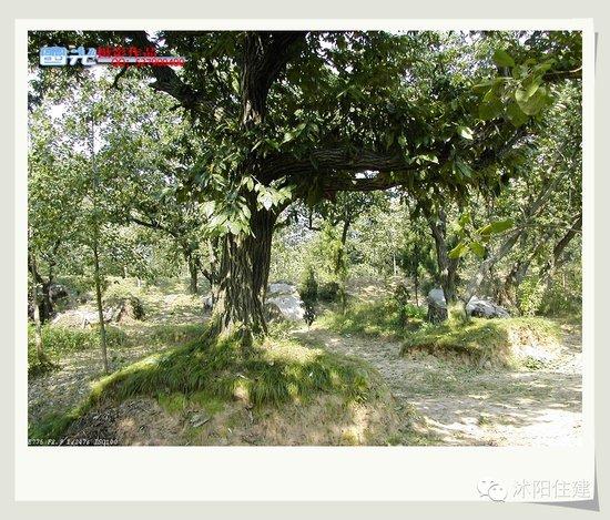 沭阳经典景点之古栗林公园